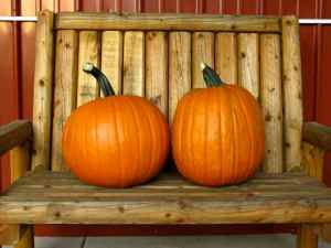 pumpkins on bench