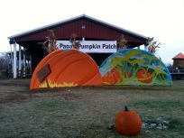 pumpkin and patch plus one pumpkin