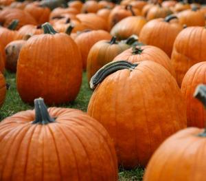 freshly washed pumpkins