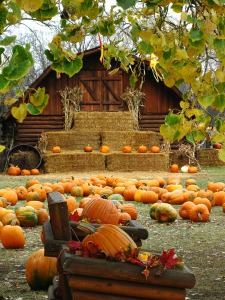 barn scene thru leaves lo