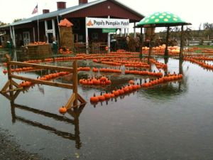 flooded pumpkins