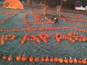 Papas in pumpkins