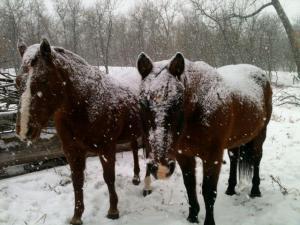 fuzzy horses