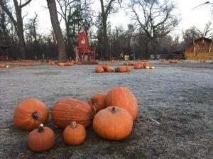 last day of pumpkins - 1