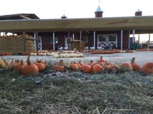 last day of pumpkins2 - 1