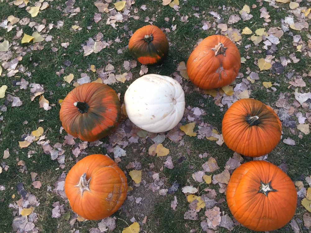 seven pumpkins left