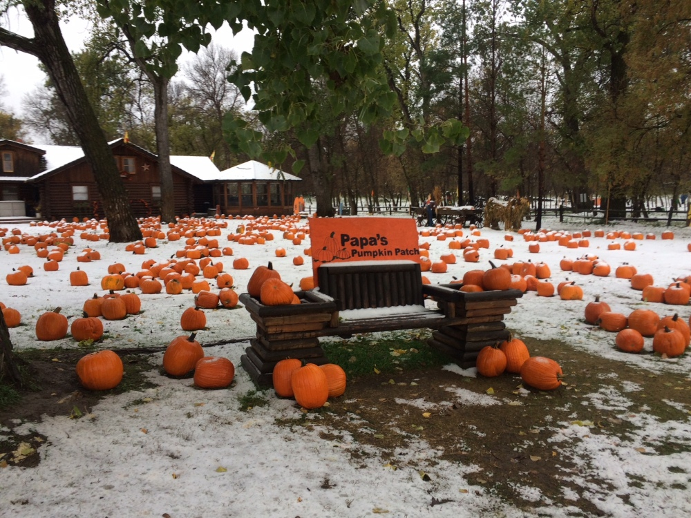 pumpkins and snow